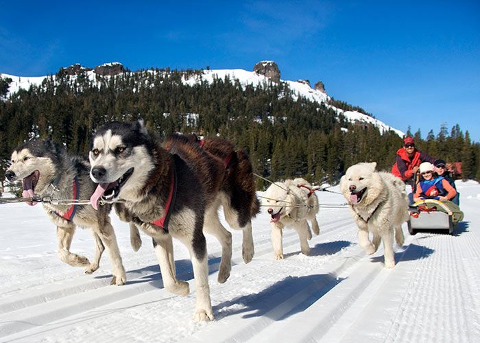 family dog sledding